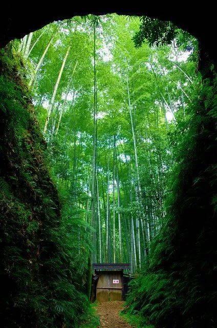 《竹林听雨》宁静,淡泊,悠远!图片