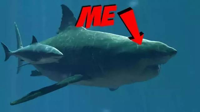 史前多种鲨鱼图解