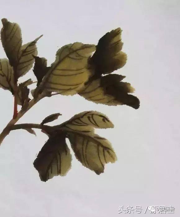 国画牡丹叶子和枝干的画法图片