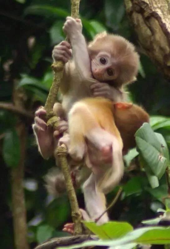 哇噻!听说这里有百年难遇的双胞胎猴宝宝,你还不来?图片