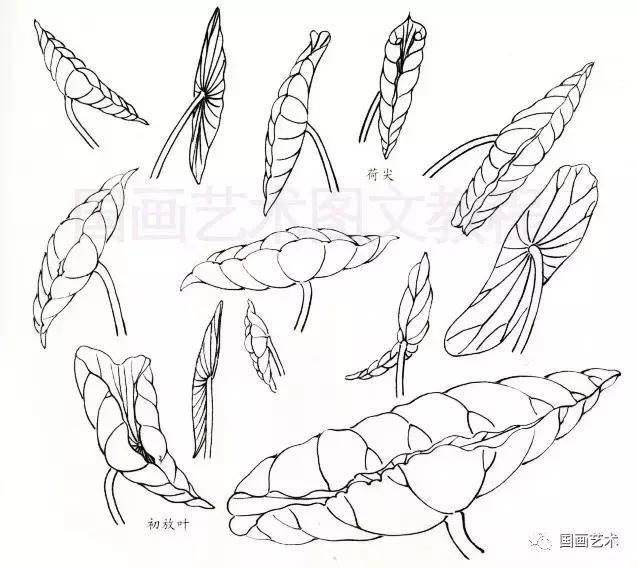 工笔荷叶的各种画法图文详解,工笔画荷花步骤,工笔荷花染色教程