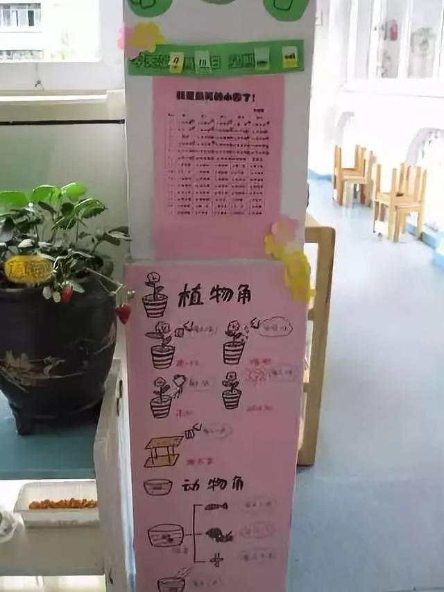 幼儿园植物角创意环创布置,让创意与互动飞起来
