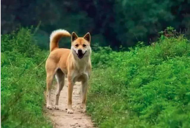 原来这才是狗狗被抛弃的原因,短短八个字让网友在大夏天感到一丝寒意