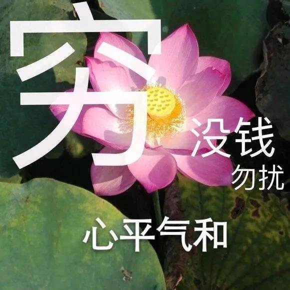 全网最全莲花头像,love&peace