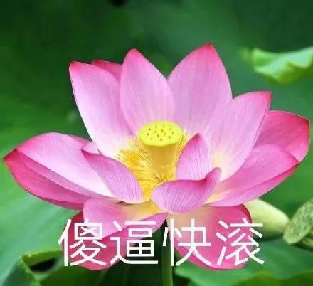 最近流行【佛系莲花】表情包