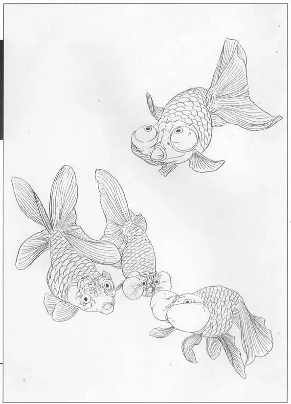 线描金鱼画谱,太漂亮了!图片