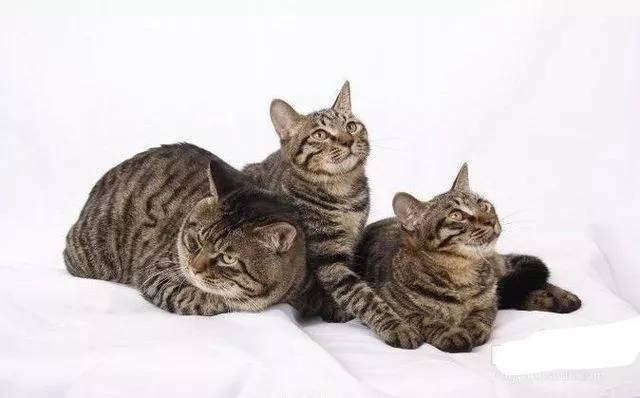 情报局 我们一起学猫叫,一起喵喵喵