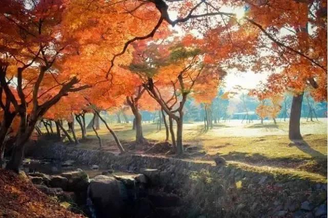 番禺中旅带你玩转日本枫叶季,满足您对秋天的幻想!图片