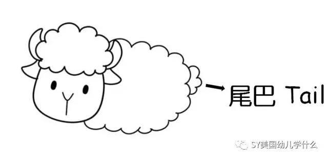 美国幼儿园美术第二课 【简笔画动物】小绵羊图片