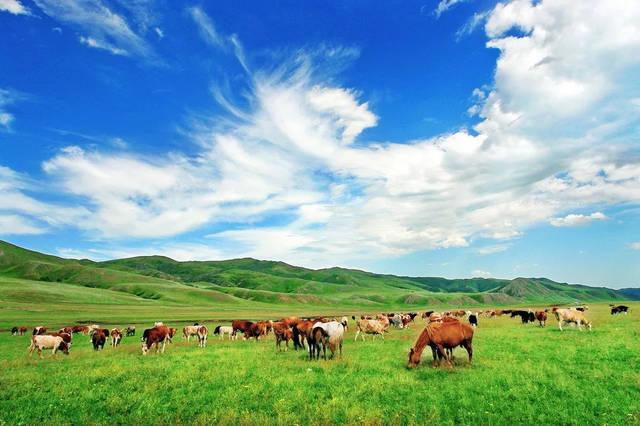 乌拉盖草原是世界上保存最完好的天然草原!