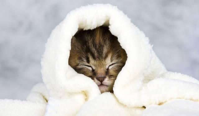 猫咪视频_人类会感冒,猫咪也会感冒吗?