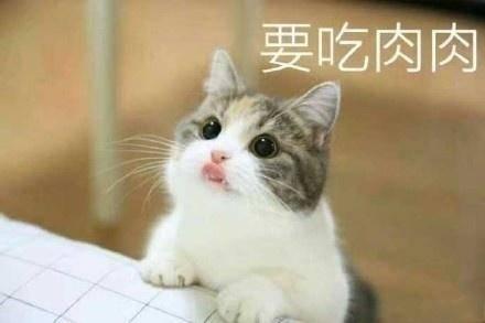 猫咪要钱吃肉肉表情包