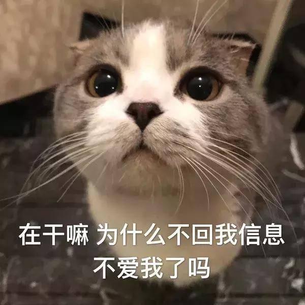 热门表情包:在干嘛,为什么不会我信息,不爱我了吗图片