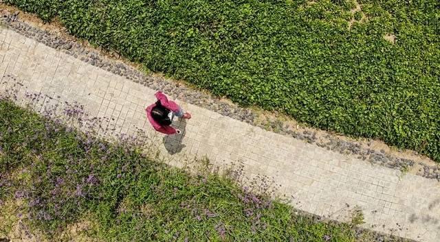 凤山森林公园占地92.2公顷,相当于5个紫荆山公园大小.图片