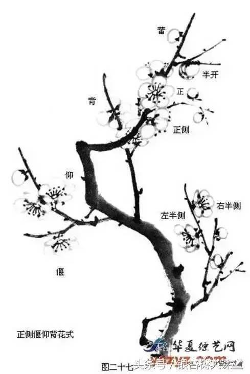《芥子园》:梅花的画法图片