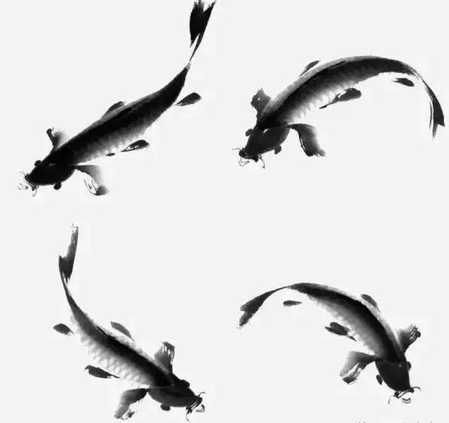 【国画知识】国画写意鲤鱼,金鱼的画法,一学就会!图片
