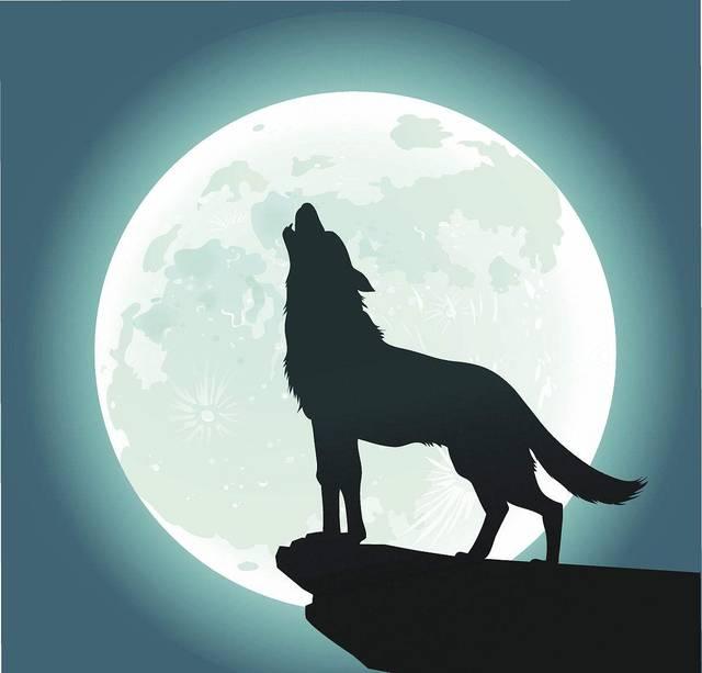 10.狼在嚎叫时,根本不关月亮半毛事,狼嚎只在召集其它狼一起猎食.