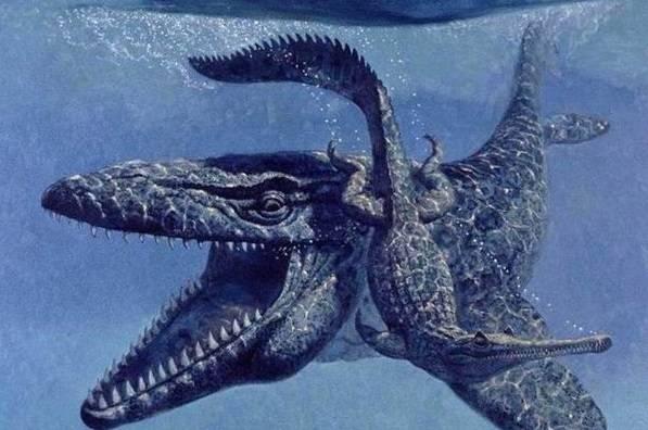 长相酷似脖子变短的蛇颈龙,是白垩纪早期霸主图片