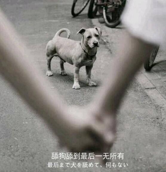 舔狗舔到最后一无所有是什么意思 表情包分享