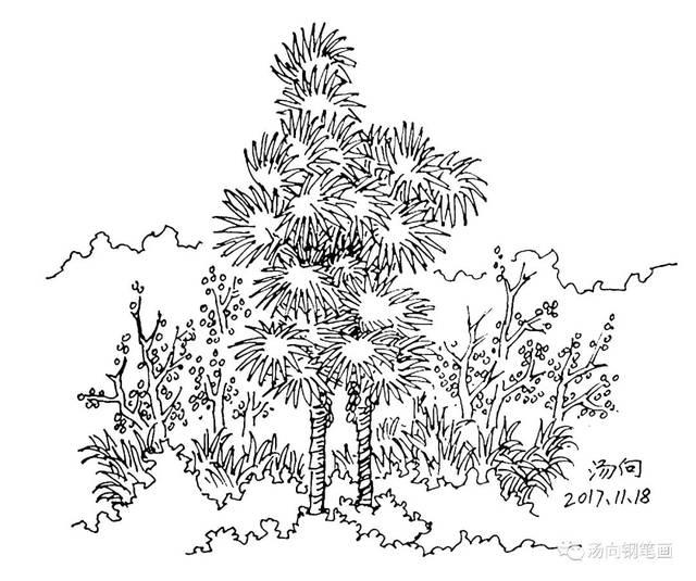 此画是棕榈树.图片