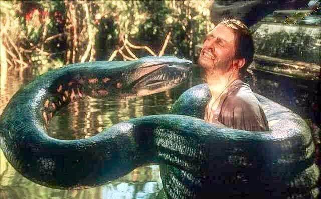 地球上体型最大的蟒蛇,堪称恐怖蛇王,让人毛骨悚然!