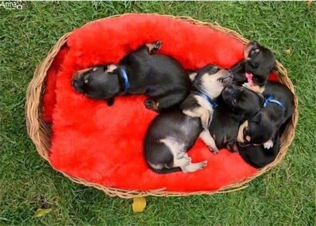 正在呼呼大睡的小家伙们,你们的睡姿已经被完美记录下来了.图片