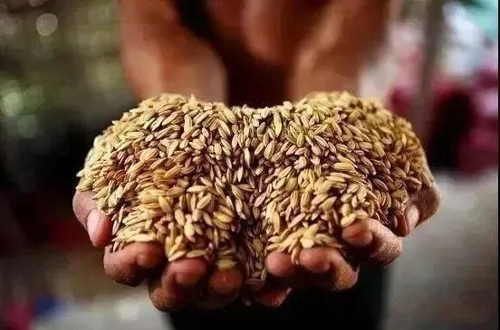 """专题┆ """"世界粮食日 """" 你挥霍的,正是别人渴求的!图片"""