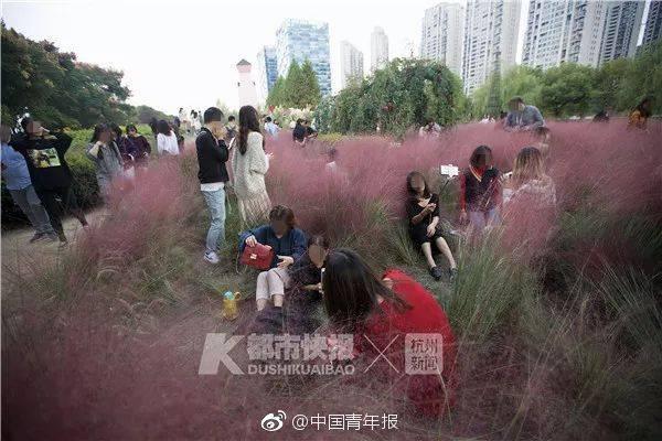神吐槽:美不过三天!多处网红花海因游客踩踏严重,被迫提前收割