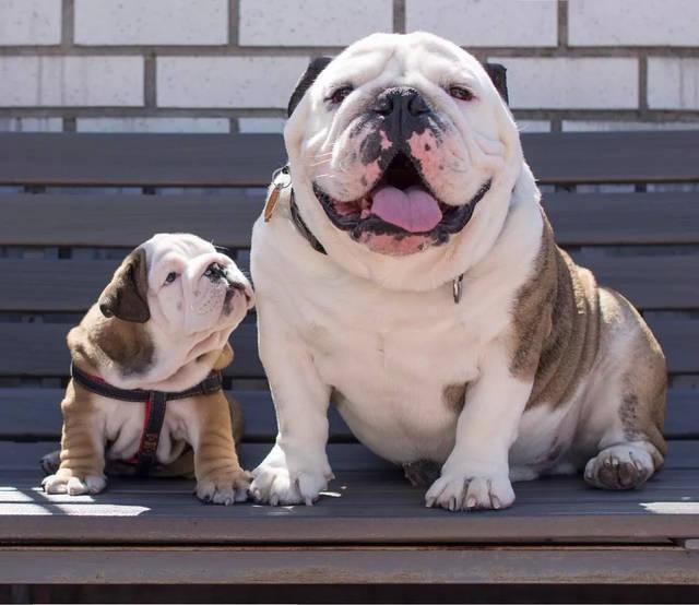 孕和狗干电影_是否受孕主要看母犬是否排卵,以及公犬精子是否正常,至于怀几个狗宝宝