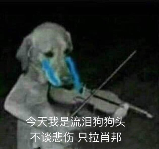流泪猫流泪狗表情包:今天我是流泪狗狗头,不谈悲伤,只图片