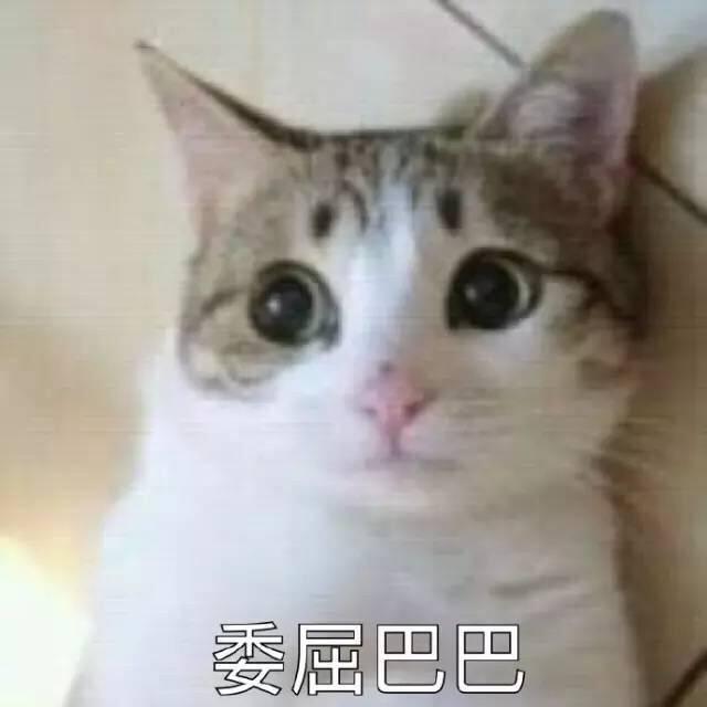 猫星人委屈巴巴的表情包图片