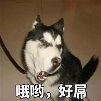 最全沙雕狗子表情包合辑!年度最傻狗子都在这儿了!图片