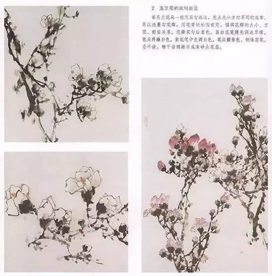 国画技法-玉兰花的绘画技法图片