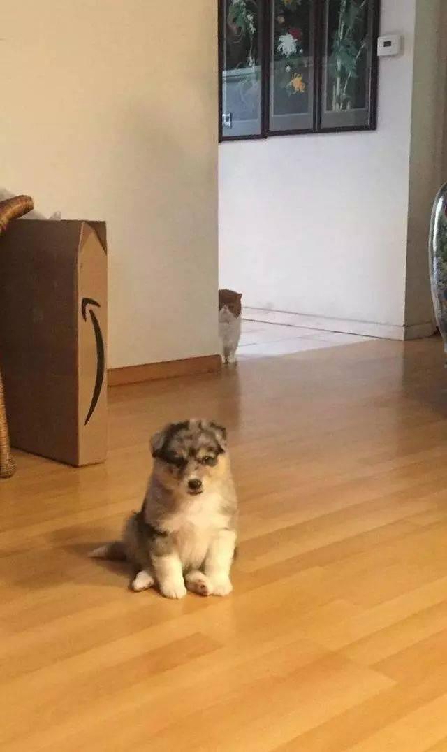偷偷撸摸网站_主人撸猫时偷偷摸了一下狗子,后果……相当严重!