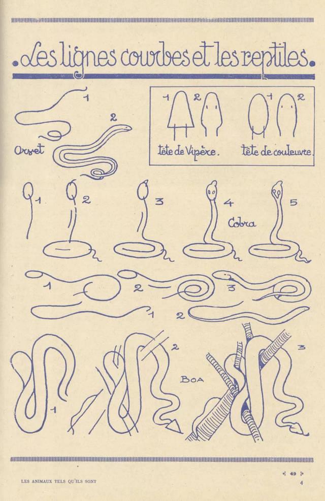 1分钟,5个步骤,轻松画出猫狗兔蝴蝶大象各种小动物 简