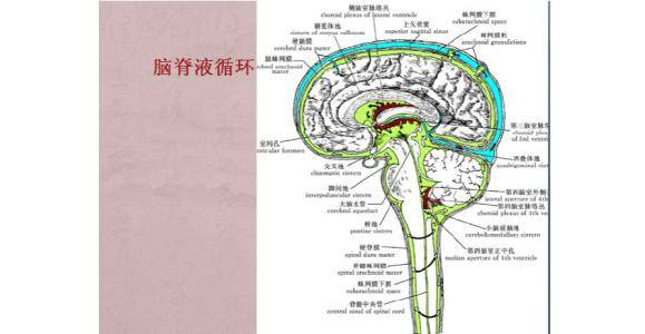 脑脊液正常颜色_每24小时能产生大约0.473升脑脊液,约141.