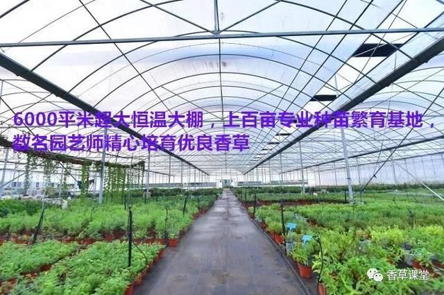 冬天到了春天还会远吗,2019年香草种苗预定开始,大货还可享受8.