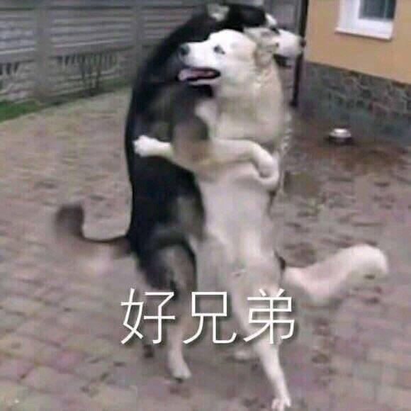 狗狗表情包斗图系列:好兄弟,好好做狗,心如死灰图片