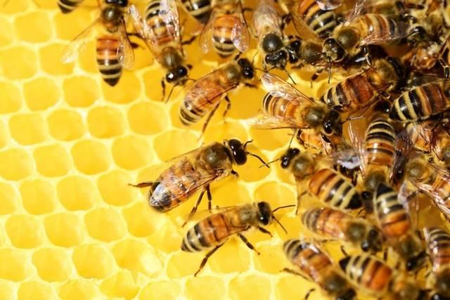 小蜜蜂不采蜜,要去搜炸弹了图片