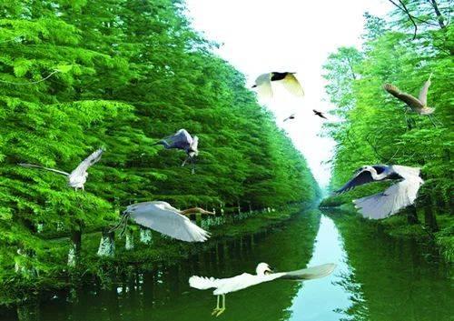 金湖水上森林公园,白马湖菊花展一日游图片