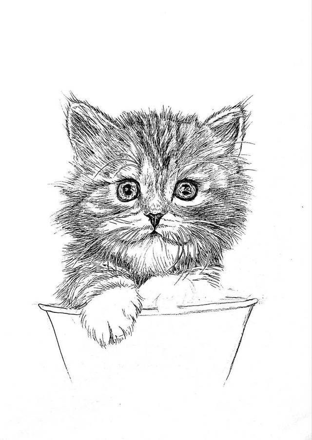 针管笔手绘   超详细步骤画一只小猫咪