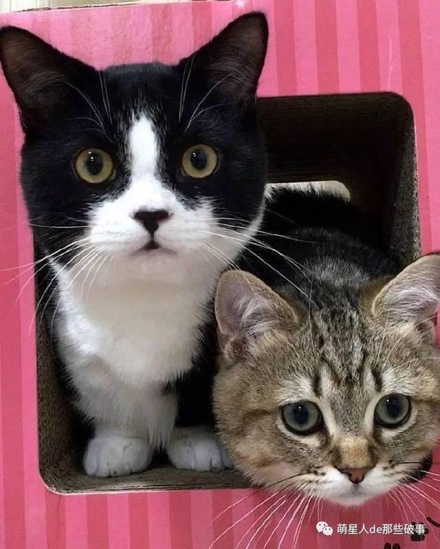 狠狠撸正版高清_这么可爱的猫咪真想狠狠撸一把!