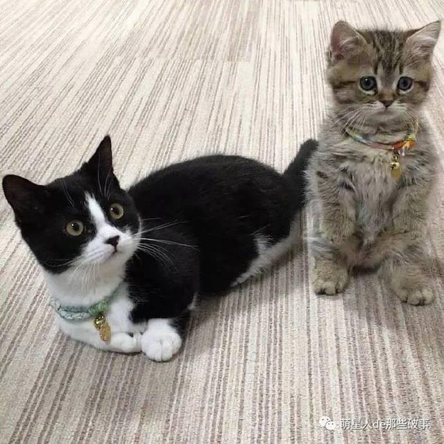 第一撸网_这么可爱的猫咪真想狠狠撸一把!