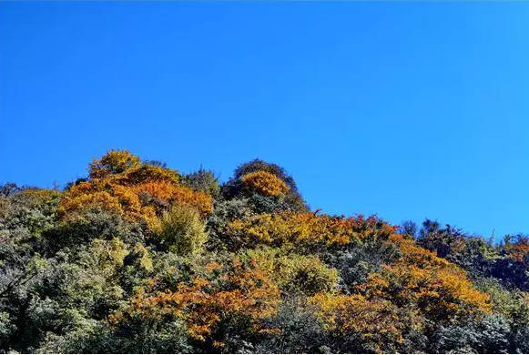 初冬登山正���r,快到昆明周�最近的雪山去看看