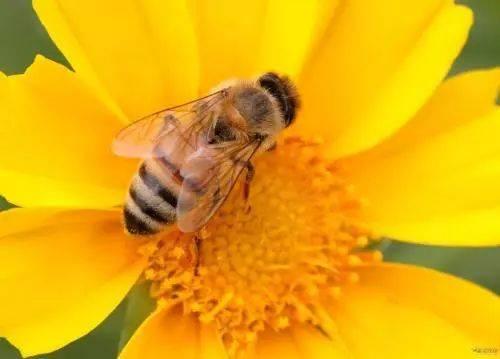 每日一题   勤劳小蜜蜂们,一起来采蜜吧(选择题)图片