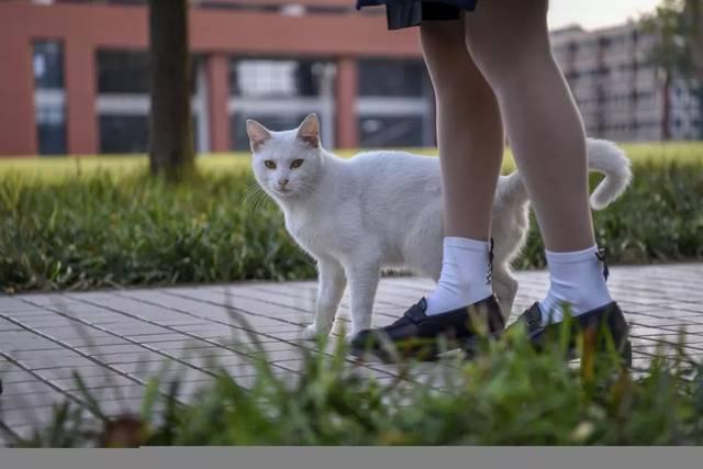 撸洗澡媳妇_sufe光影丨财大猫咪图鉴