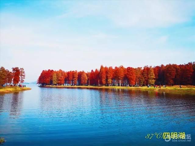 最美的宁波初冬——四明湖红杉林,照片拍得实在漂亮!图片