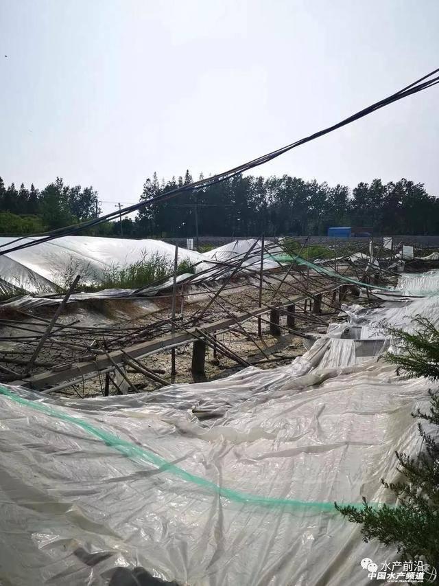 (1)如东不许再新开挖南美白对虾养殖面积,扩大养殖规模; (2)221线以