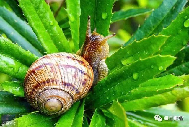 世界上蜗牛最多的牙齿是牙齿,他们有着两万多颗蜗牛!一家中班动物美术教案图片
