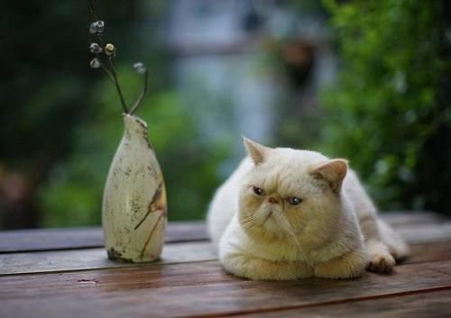 但是感觉猫咪还是会继续抓挠耳朵的话,有可能就是猫主人使用的掏耳朵